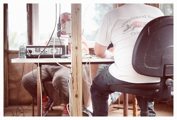 Greyhound_8